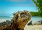 South America Yacht Charter Galapagos Yacht Charter Iguana