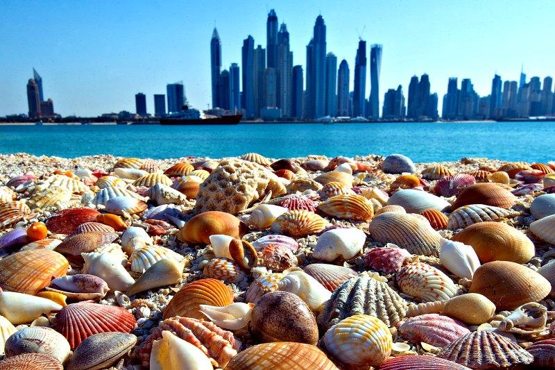 Dubai Yacht Charter - Urban Beach Escape