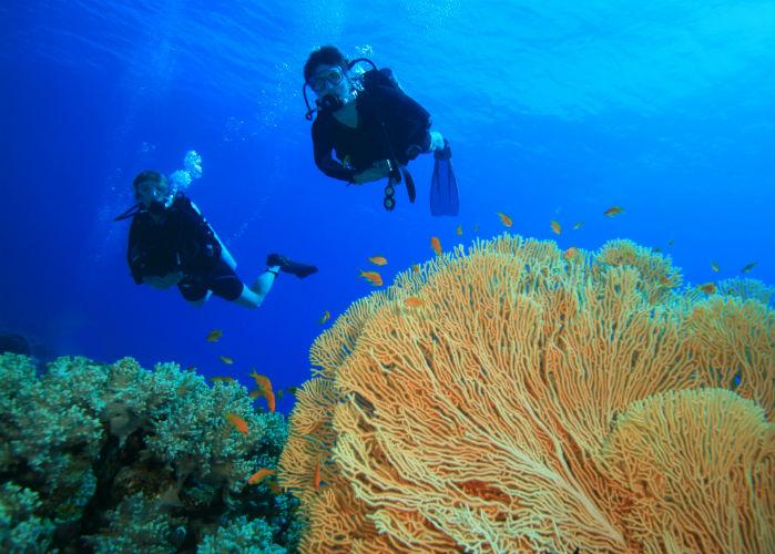 Florida Keys yacht charter - snorkeling coral