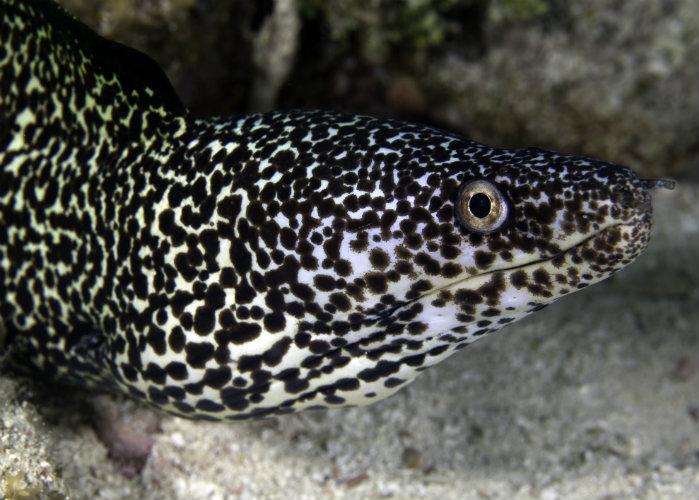 Florida Keys yacht charter - snorkeling eel