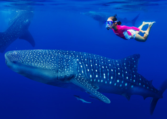 Mexico yacht charter - whale sharks