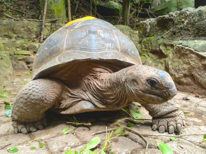 La Digue yacht charter - tortoise